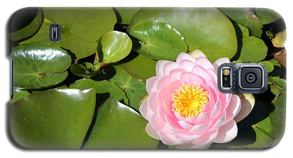 Pink Waterlily Galaxy S5 Case