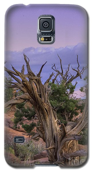 Pinon Pine Galaxy S5 Case