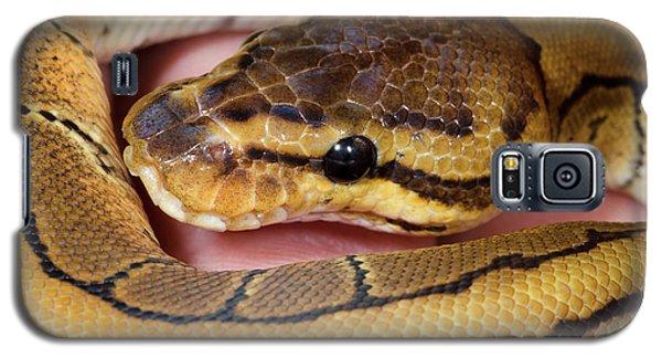 Pinstripe Royal Python Galaxy S5 Case