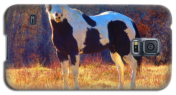 Galaxy S5 Case featuring the photograph Pinto In The Pasture by Anastasia Savage Ealy