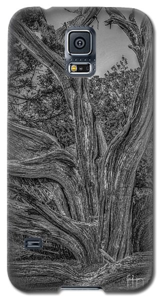 Pinyon Pine Galaxy S5 Case