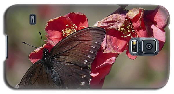Pipevine Swallowtail And Roses Galaxy S5 Case