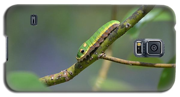 Pipevine Swallowtail Caterpillar Galaxy S5 Case