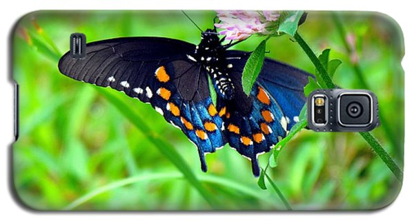 Pipevine Swallowtail Hanging On Galaxy S5 Case