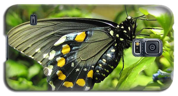 Pipevine Swallowtail Galaxy S5 Case by Jennifer Wheatley Wolf