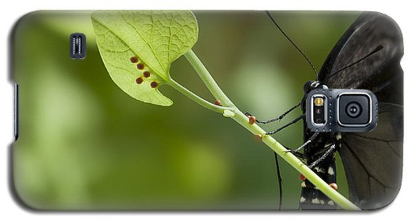 Galaxy S5 Case featuring the photograph Pipevine Swallowtail Mother With Eggs by Meg Rousher