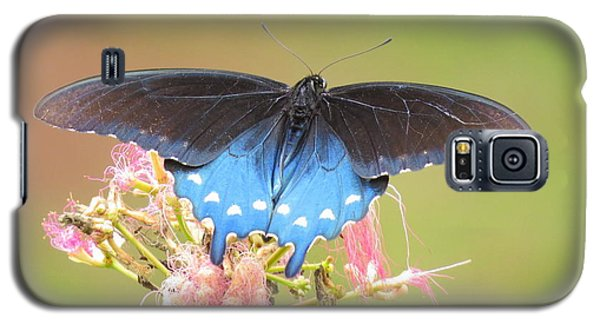 Pipevine Swallowtail Galaxy S5 Case