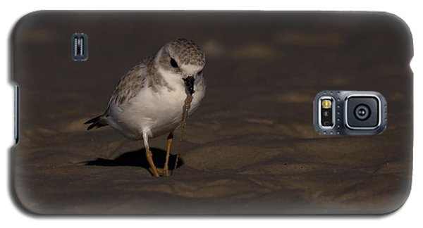 Piping Plover Photo Galaxy S5 Case