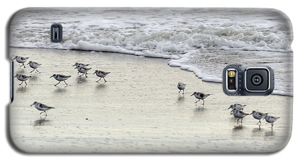 Piping Plovers At Water's Edge Galaxy S5 Case