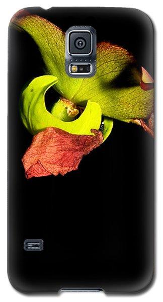 Pitcher Me Perfect.... Galaxy S5 Case by Tammy Schneider