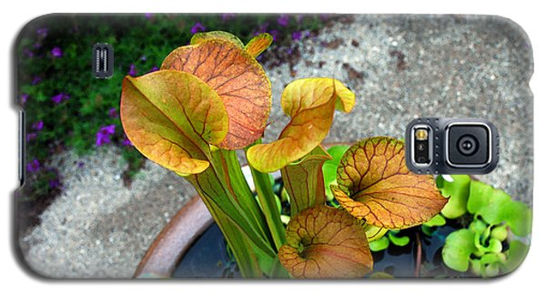 Galaxy S5 Case featuring the photograph Pitcher Plants by Allen Carroll