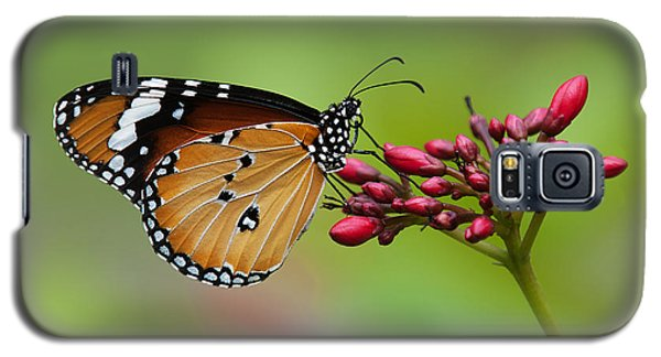 Plain Tiger Or African Monarch Butterfly Dthn0008 Galaxy S5 Case