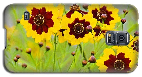 Plains Coreopsis Galaxy S5 Case