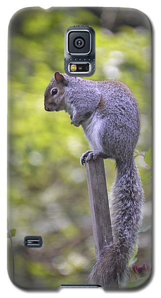 Planning A Raid On The Bird Feeder Galaxy S5 Case