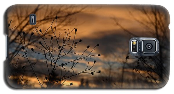 Planted Sunset Galaxy S5 Case
