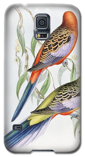 Parakeet Galaxy S5 Case - Platycercus Adelaidae From The Birds Of Australia by John Gould