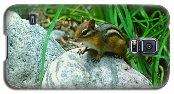 Galaxy S5 Case featuring the photograph Playful Chipmunk by Gary Wonning