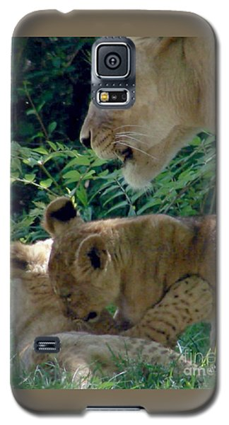 Playful Cubs Galaxy S5 Case