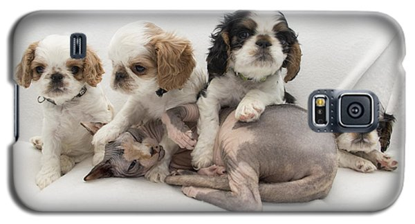 Playful Puppies Galaxy S5 Case