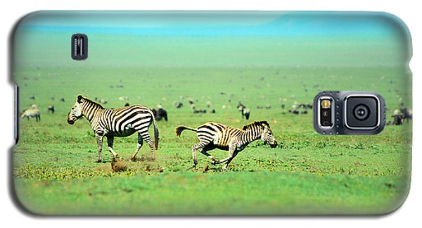 Playfull Zebras Galaxy S5 Case by Sebastian Musial