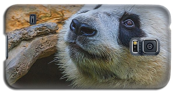 Pleading Panda Galaxy S5 Case