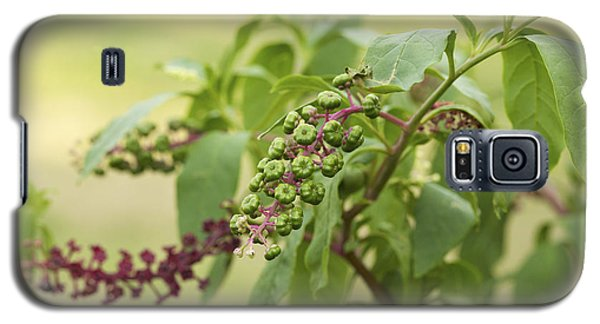 Galaxy S5 Case featuring the photograph Pleasing To The Eye - Pokeweed Vine Art Print by Jane Eleanor Nicholas