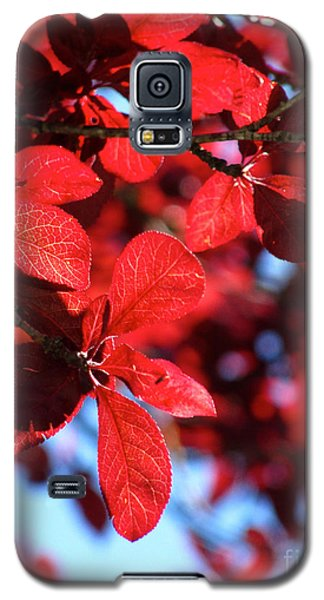 Galaxy S5 Case featuring the photograph Plum Tree Cloudy Blue Sky 2 by CML Brown