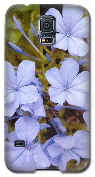 Plumbago Auriculata Or Cape Wort Galaxy S5 Case by Rod Ismay