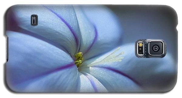 Plumbago Galaxy S5 Case