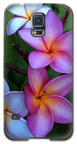 Plumeria Blossoms Galaxy S5 Case