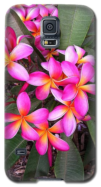 Plumeria Bouquet  Galaxy S5 Case