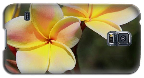 Plumeria Frangipani Galaxy S5 Case by Joseph G Holland
