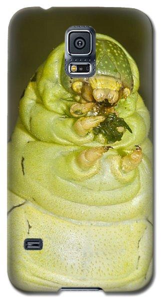 Plump Green Caterpillar Galaxy S5 Case