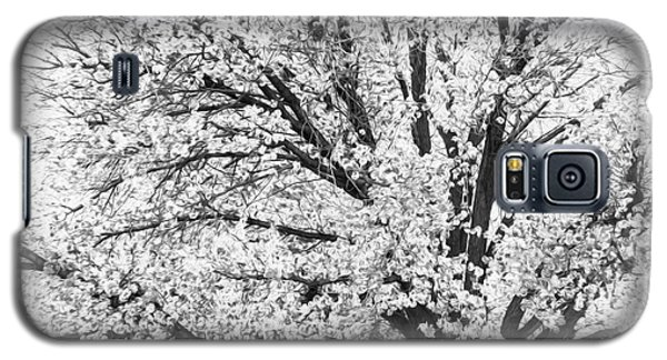 Galaxy S5 Case featuring the photograph Poetry Tree by Roselynne Broussard