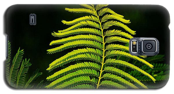 Galaxy S5 Case featuring the photograph Poinciana Leaf by Lorenzo Cassina
