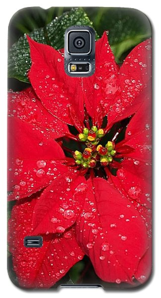 Poinsettia - Frozen In Time Galaxy S5 Case