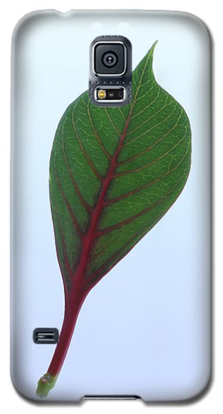 Poinsettia Leaf Galaxy S5 Case by Richard Stephen