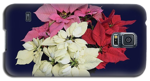 Galaxy S5 Case featuring the photograph Poinsettia Tricolor II by R  Allen Swezey