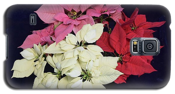 Galaxy S5 Case featuring the photograph Poinsettia Tricolor by R  Allen Swezey