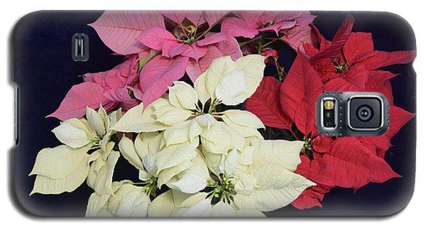 Poinsettia Tricolor Galaxy S5 Case