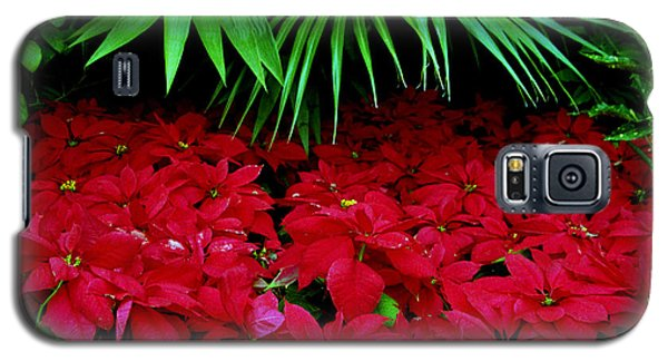 Galaxy S5 Case featuring the photograph Poinsettias And Palm by Tom Brickhouse