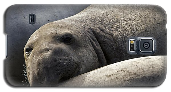 Point Piedras Blancas Elephant Seal 1 Galaxy S5 Case