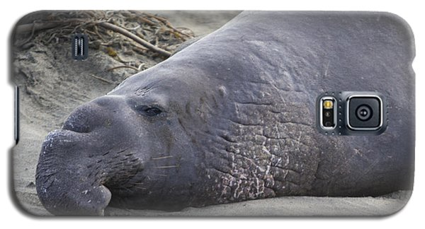 Point Piedras Blancas Elephant Seal 3 Galaxy S5 Case