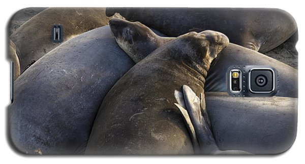 Point Piedras Blancas Elephant Seals 2 Galaxy S5 Case