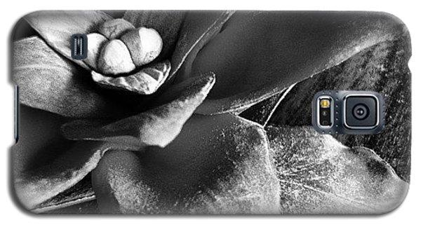 Pointsettia Still Life  Galaxy S5 Case by Judi FitzPatrick