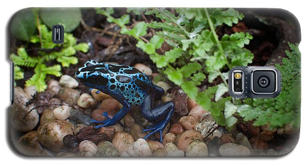 Poison Dart Frog Galaxy S5 Case by Carol Ailles