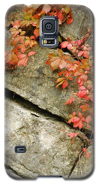 Galaxy S5 Case featuring the photograph Poison Ivy by Mary Carol Story