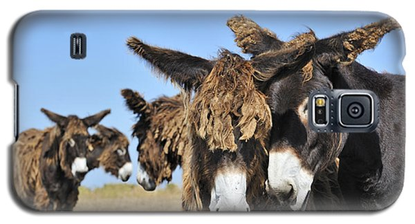 Galaxy S5 Case featuring the photograph Poitou Donkey 3 by Arterra Picture Library