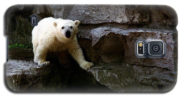 Galaxy S5 Case featuring the photograph Polar Bear Cub by Tom Brickhouse