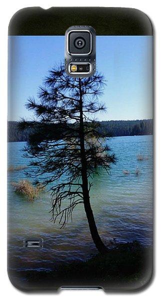 Pollock Pine Galaxy S5 Case